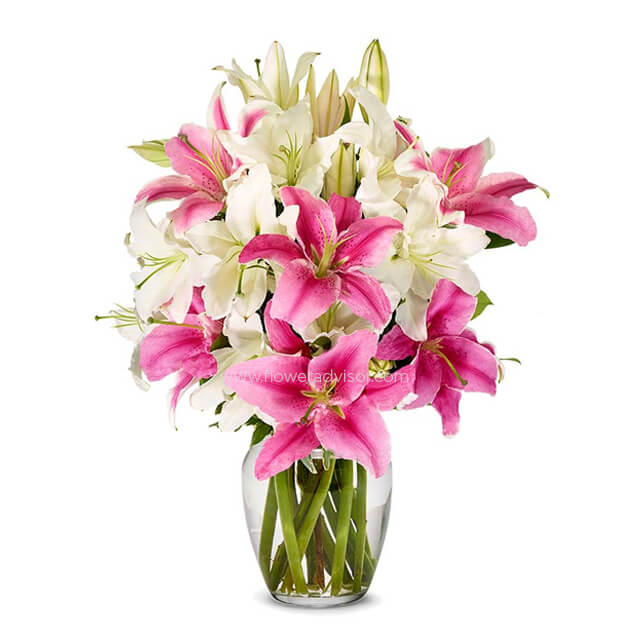 Stunning Pink and White Lilies - Birthday