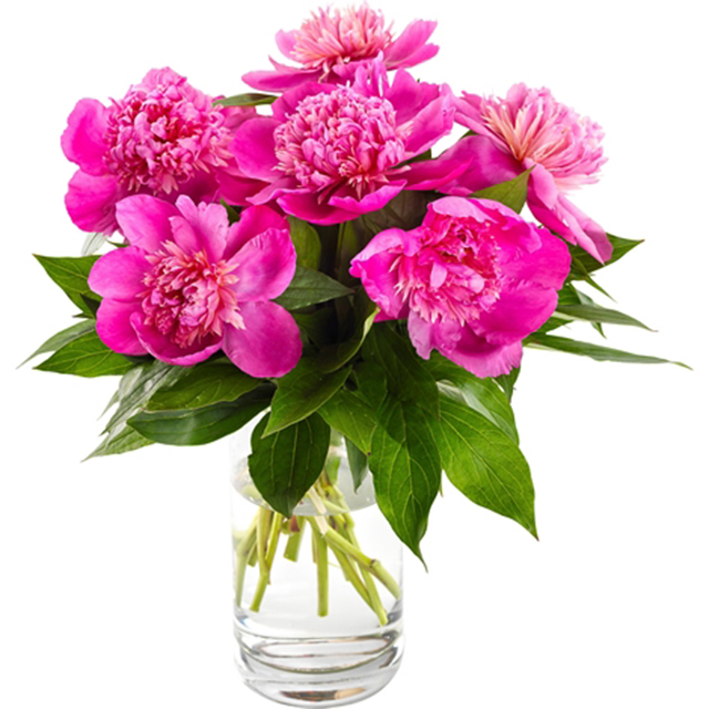 Deep Pink Peonies Dream Vase