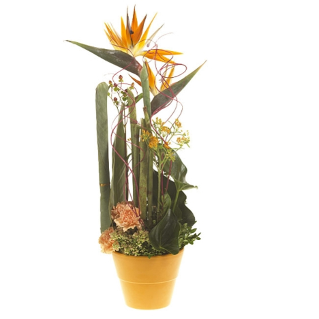 Flower arrangement (orange)