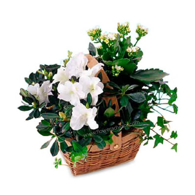 White Blooming Basket - Flowers Basket